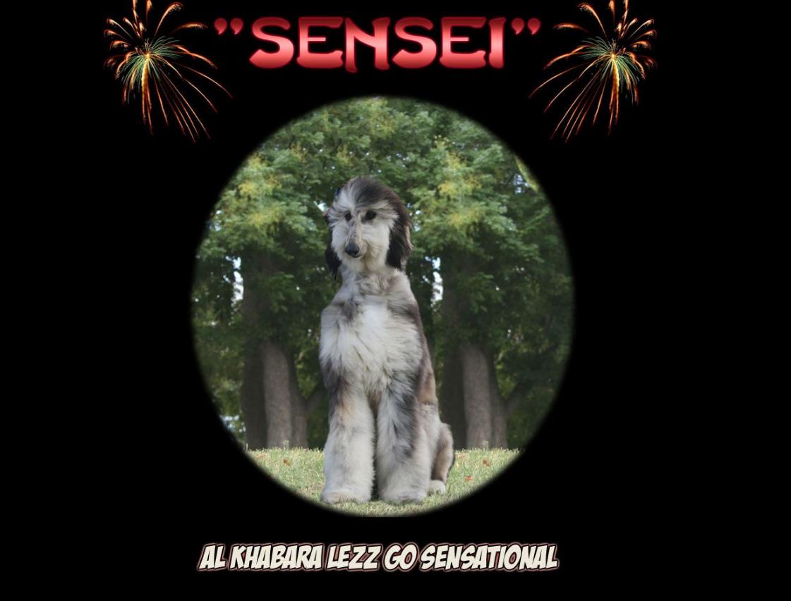 Sensei at afghansonline.com