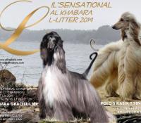L-litter 2014