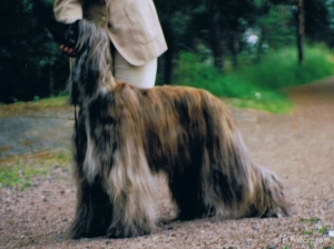 1998meerihki