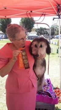 2015-08-23-bob-puppy