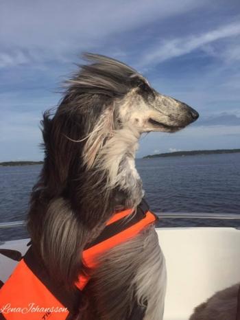 2016-08-21-rocky-in-boat