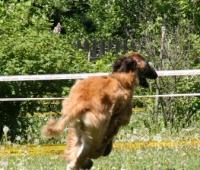 Hamie running