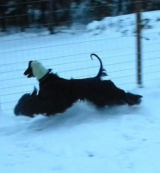 2012-12-12-mustikka-23month-1
