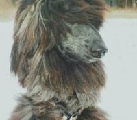 Maasu 1 year old