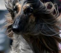 Bengu 3 years old