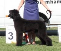 BIS  III Puppy