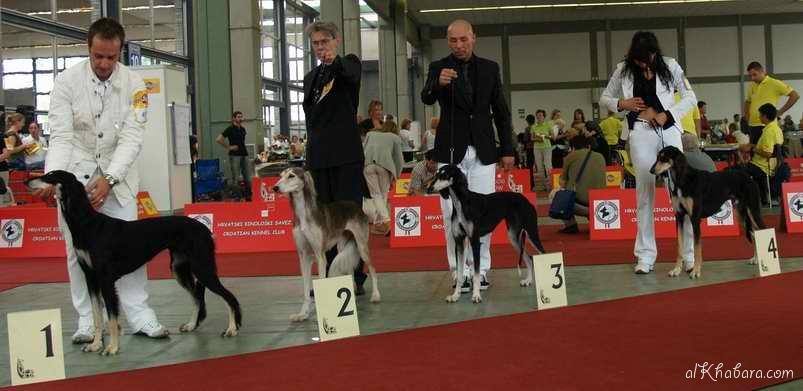 European Veteran Winner 2007,  Reserve Best Female in Breed