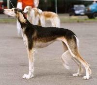 SBOB  Baltic Sighthound 2000