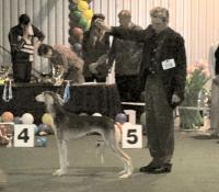 BIS Veteran, Lithuanian Winner -2006