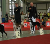 European Veteran Winner 2007,  Reserve Best Female in Breed