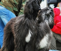 Hunting Breeds Specialty 12.05.2012