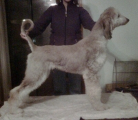 w_halo-puppy