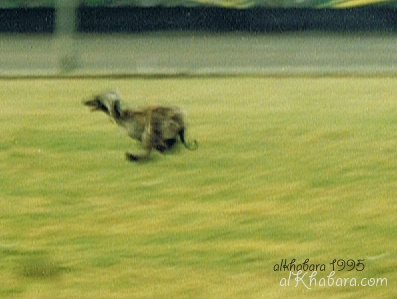 1995 coursing