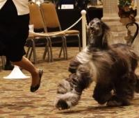 TARA AHC Specialty Show, USA 2012
