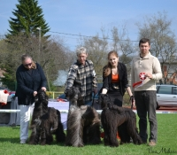 Hunting Breeds Specialty 11.05.2013