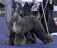 World Dog Show 2012 Austria
