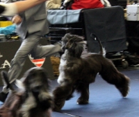 Lilli flying in ring